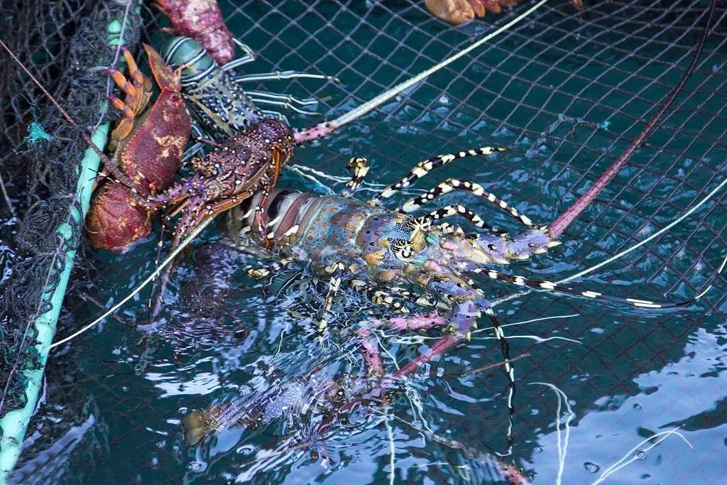 Lobster & Fish Farm